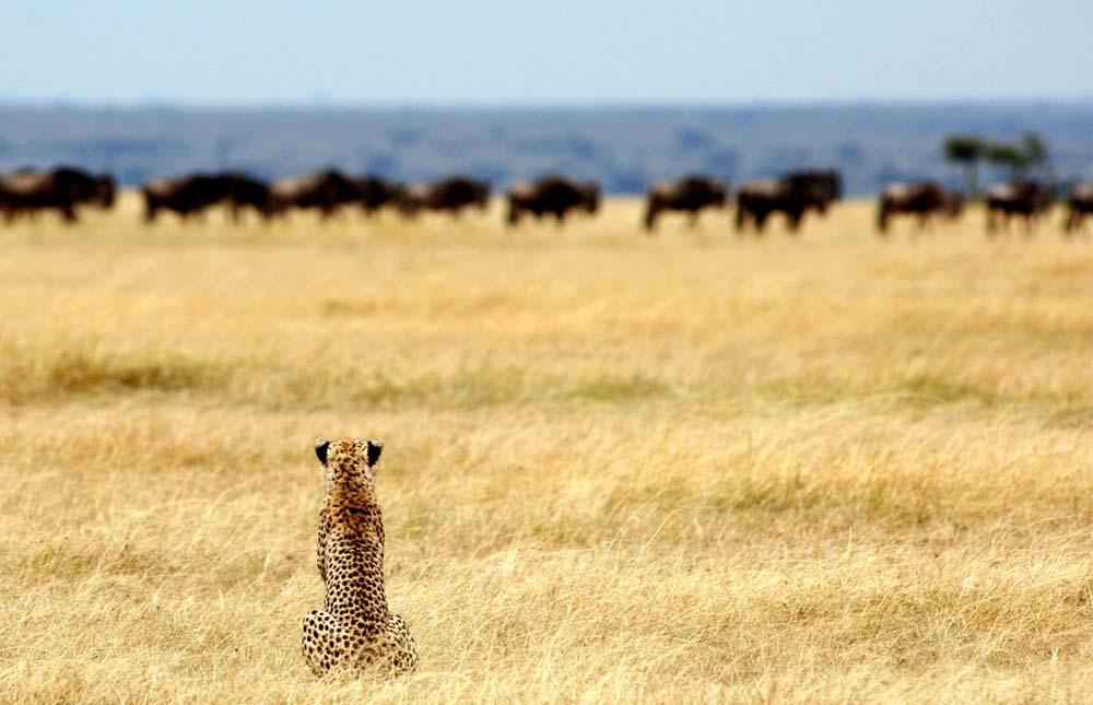 Serengeti National Park – Lake Victoria
