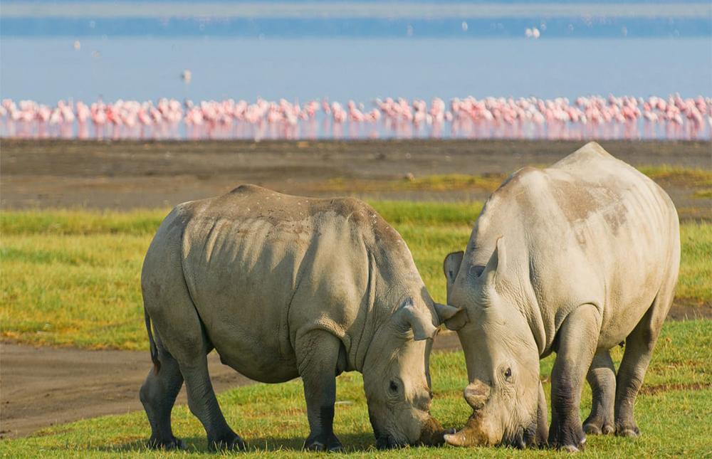 Masai Mara Area – Lake Nakuru National Park