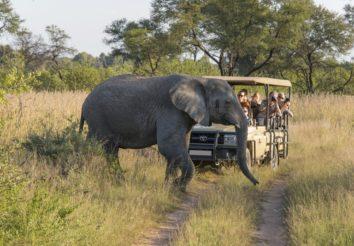 Kruger Wildlife Safari
