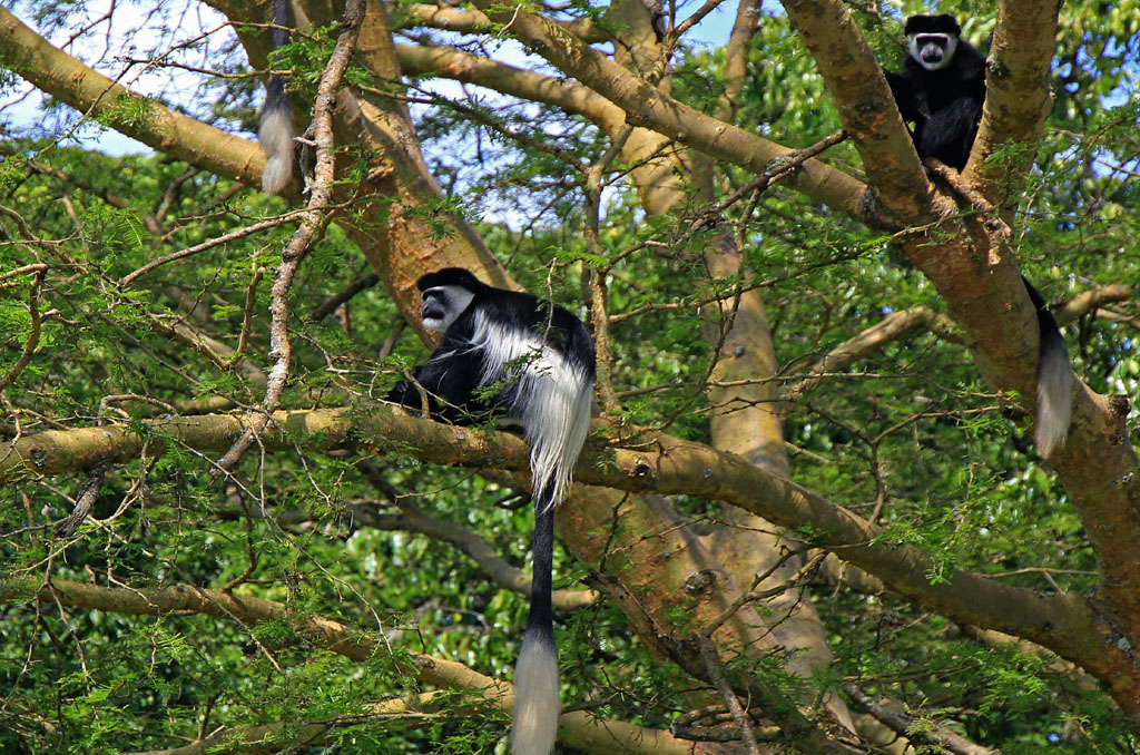 Entebbe to Kibale Forest National Park