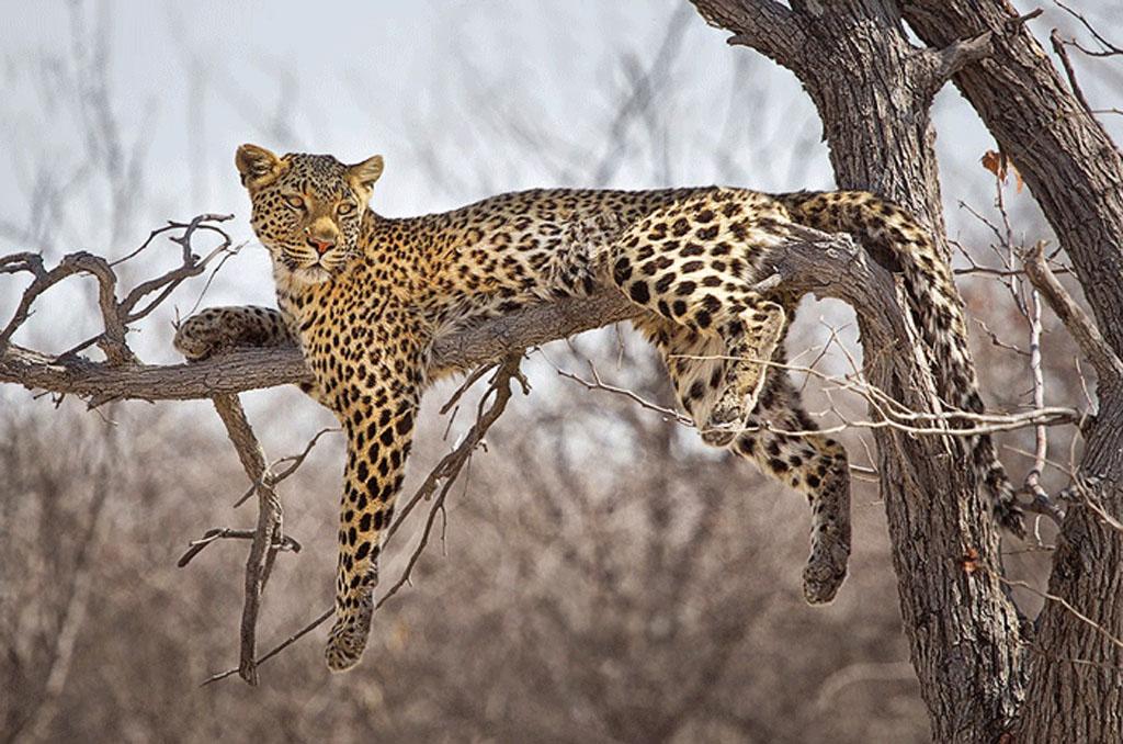 Fly to Etosha National Park