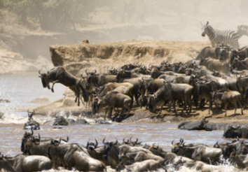 5 Things you need to know on great migration in Serengeti