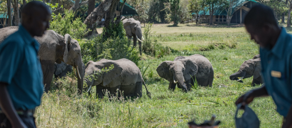 Elephants - Safarihub