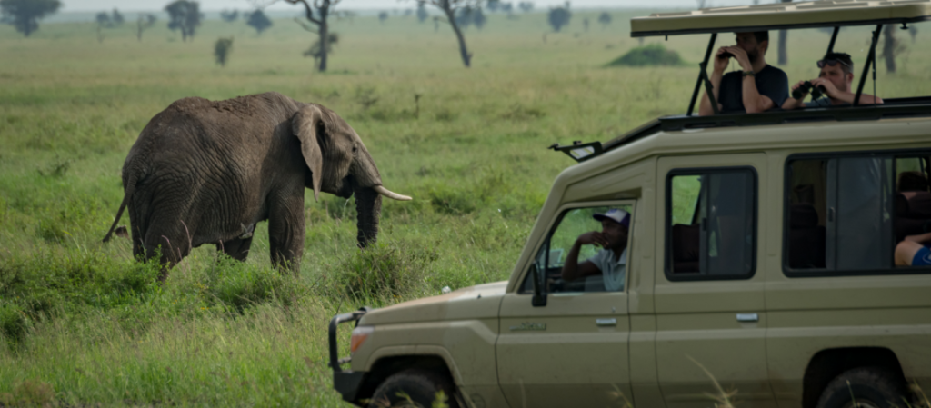 Select an appropriate Safari Destination - Safarihub