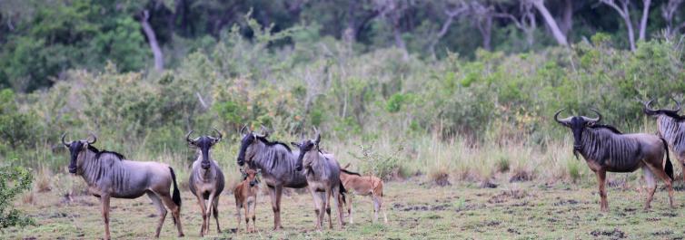 Largest faunal parks - Safarihub