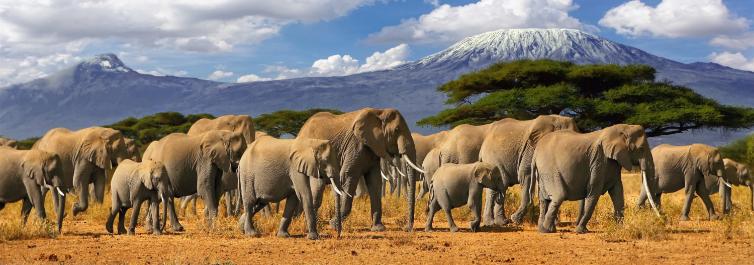 Large Herds of Elephants - Tarangire National Park - Safarihub