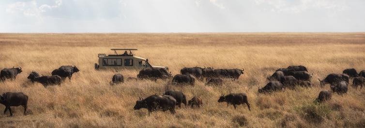 """Origin of the name """"Serengeti - Safarihub"""