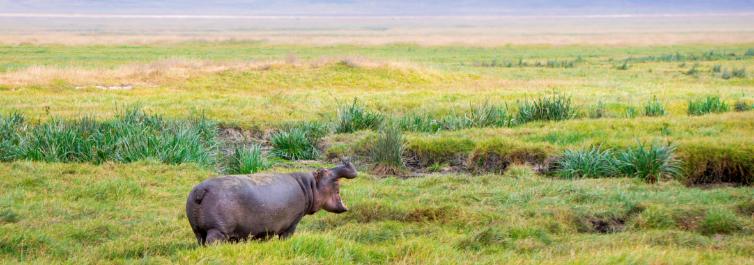 Rhino - Safarihub