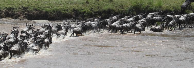 History of the Serengeti - Safarihub