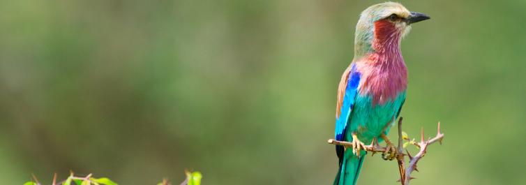 Bird watcher's paradise - Safarihub
