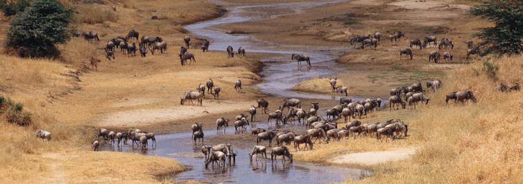 wildlife - Safarihub