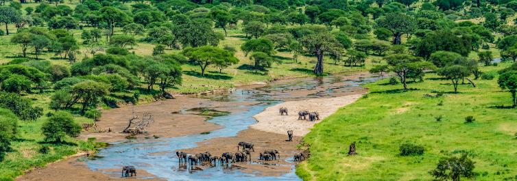 Diverse vegetation - Tarangire National Park - Safarihub