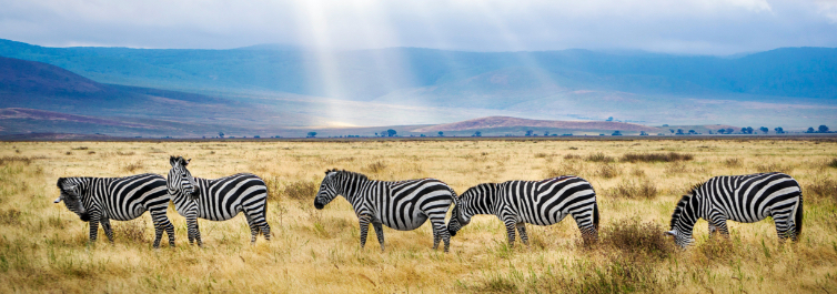 NGORONGORO CONSERVATION AREA - Safarihub