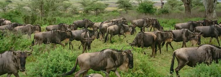 Gazelles - Ngorongoro Crater - Safarihub