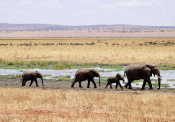 5 Great reasons to visit Tarangire National Park