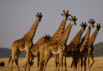 5 Things You Need to Know About A Serengeti Safari