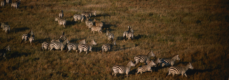 The great Migration - Safarihub