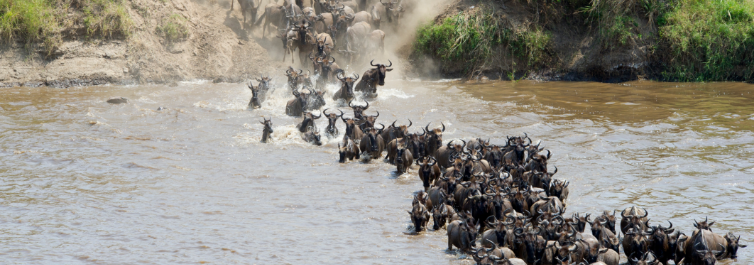 Crossing the Mara River - Safarihub