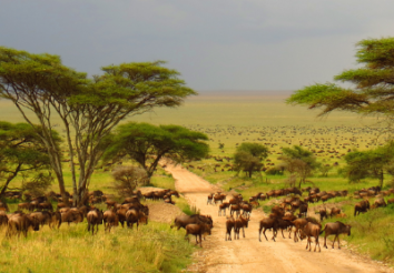 5 Things to Know About The Great African Migration Safari