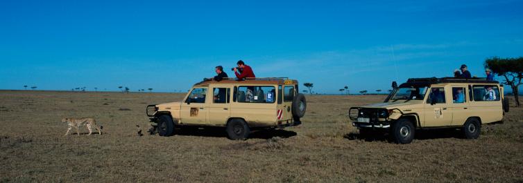 Safari Safety - Safarihub