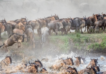 6 Tips for Planning A Great Migration Safari