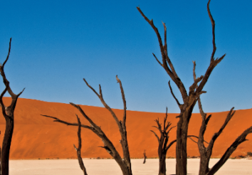 Amazing Facts About Namib Desert
