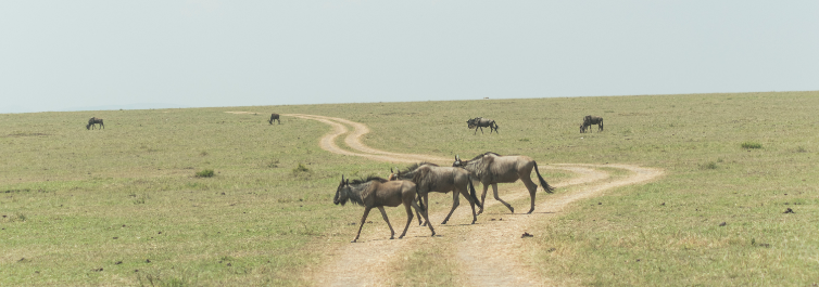 MAASAI MARA - Place to visit in Africa in 2021