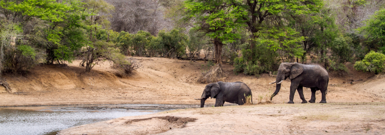 KRUGER NATIONAL PARK - Places to Visit in Africa in 2021