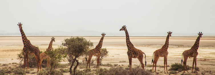 AMBOSELI NATIONAL PARK - Places to Visit in Africa in 2021