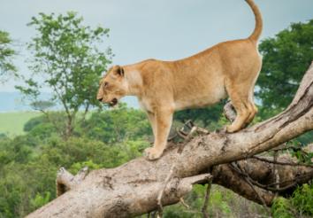 7 Best Uganda Safari Tour Packages