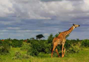 5 Best Group Safari Packages Under $1500