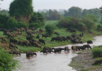 8 Reasons to Hire Safarihub- An Africa Safari Specialist