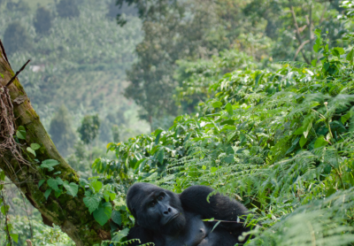 Top 5 Places to Spot Mountain Gorillas in Africa
